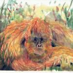 """Orangatang"" by DoyleArts"