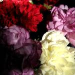 """Carnations"" by Alvimann"