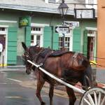 """New Orleans - Bourbon Street Horse"" by Ffooter"