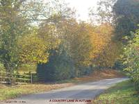 A Country Lane in Autumn