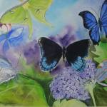 """Butterflies and Moths"" by MaryDonaldsonPowell"