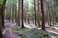Forest  Llantrisant, Wales