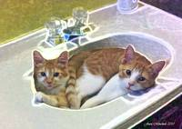 Cats in the sink