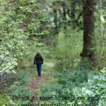 """""""The Path"""" by westwindranchcreations"""