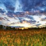 """Goldenrod and October Sky by Jim Crotty"" by jimcrotty"