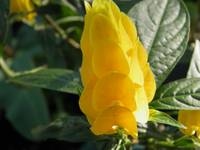 yellow flower 3