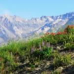 """Wildflowers and Mt. St. Helens #100727_021.1g."" by anselprice"