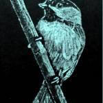 """BC_Chickadee_lt bl"" by oltymestudio"