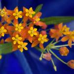 """""""Red Yellow Floral"""" by sparrow303030"""