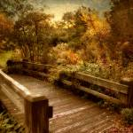 """Splendor Bridge"" by JessicaJenney"