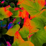 """Ivy Abstracted"" by KarlaRickerArt"