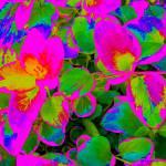"""""""Neon Pink Ivy"""" by KarlaRickerArt"""