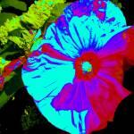 """Hibiscus Intense"" by KarlaRickerArt"