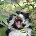 """""""A cat yawning"""" by meganrenehoover"""