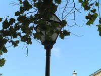 ivy-and-lamp