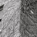 """Wall"" by newmom02"