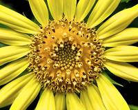 A Big Yellow Flower