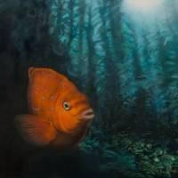 Juvenile Garibaldi in Kelp Forest Art Prints & Posters by Michael Burt