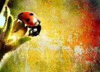 Ladybug in Color