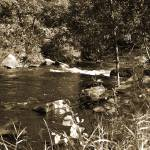 """stream - sepia"" by NaturesArtPhotography"