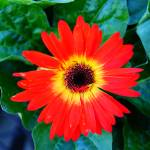 """Inferno flower"" by jiroyuki"