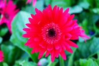 Red fire flower