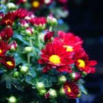"""Bashful flower"" by jiroyuki"