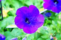 Bight purple flower
