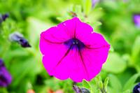 Bight pink flower