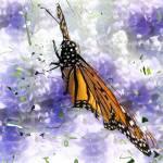 """Butterfly"" by patriciaschnepf"