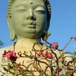 """""""Jodo Buddha"""" by tagshots"""