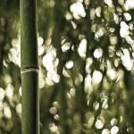 """""""Bamboo Bokeh"""" by NathanK"""