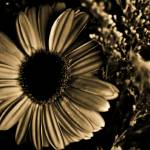 """My Valentine Flower"" by ImagesbyCecillePL"