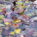 """Dreamy Gutter Water, Christmas Day #1"" by MyThirdEye"