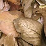"""Gilded Autumn"" by MyThirdEye"