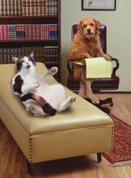 Pet Therapy: Cat Spilling Her Guts To A Dog Psychi