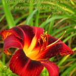 """""""Rejoice With Lily And Scripture"""" by SandiOReilly"""