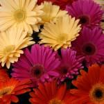 """Market flowers"" by Javatam12"
