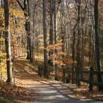 """Fall Path"" by Javatam12"