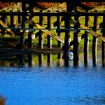 """Wooden Bridge"" by MelanieDoty"