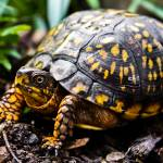 """ROAMING BOX TURTLE"" by photographybyryankelly"