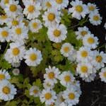 """Wild Flowers"" by elricksphoto"