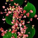 """Last Hydrangea"" by LindaCavaney"