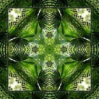 Palm Kaleidoscope 5