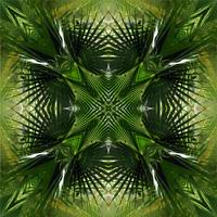 Palm Frond Kaleidoscope 7