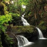 """Onomea Falls"" by jameseddy"