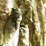 """cicada 2"" by sb1photography"