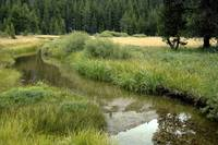 Dusy Meadow Stream