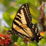 """""""Butterfly"""" by DonBakerPhotography"""