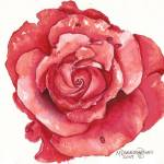 """Red Rose 2"" by MaryDonaldsonPowell"
